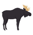 moose forest wild life isolated animals vector image