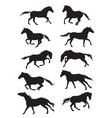 set horses silhouettes vector image vector image