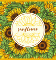 background with sunflowers and place vector image vector image