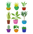 collection of house plants in colorful pots vector image