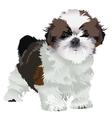 shih tzu puppy vector image