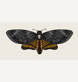 moth or butterfly vintage retro night-fly or mole vector image