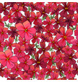 seamless pattern with flowers isolated on white vector image