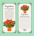 vintage label with impatiens plant vector image