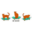 cats on skateboards isolated on a white vector image