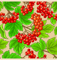 guelder rose pattern on color background vector image