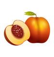 peach fruit slice realistic 3d healthy vegetarian vector image vector image
