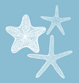 set of starfishes in hand drawn style vector image