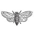 seventeen year locust vintage vector image vector image