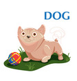 educational flashcard dog plays with ball on the vector image vector image