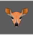 head of roe deer portrait of wild animal hand vector image vector image
