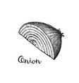 ink sketch of onion vector image vector image