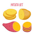 potato set sweet potatocartoon flat style vector image vector image