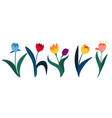 set colorful tulips in flat style isolated on vector image