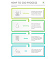 hemp to cbd process vertical business infographic vector image vector image