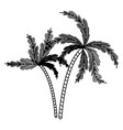 black silhouette with two palm trees vector image vector image