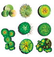 Plants top view set 2 vector image vector image