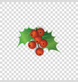 red holly berries with green leaves isolated on vector image