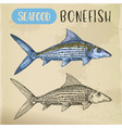 bonefish sketch or hand drawn seafood vector image