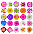 colorful flower vector image vector image