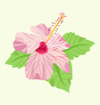 Tropical Hibiscus flower pink blossom and leaves vector image
