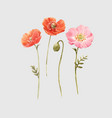 beautiful watercolor floral set with red vector image