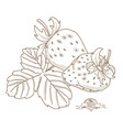 outline hand drawn strawberry flat style thin line vector image vector image