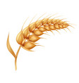 barley ears with whole grain harvest symbol vector image