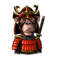 monkey with samurai sword and japan armor vintage vector image