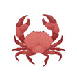 red crab with big claws sea animal marine vector image vector image