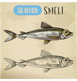 smelt or freshwater fish side view sketch vector image