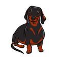black dachshund dog hand-drawn dog realistically vector image