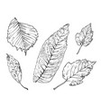 hand drawing leaves 4 vector image vector image