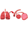 Pneumonia diagram with zoom in lungs vector image vector image