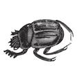 Scarab beetles vintage engraving vector image vector image