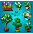 Set of decorative house plants vector image vector image
