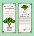 vintage label with crassula ovata plant vector image vector image