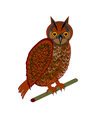 An owl on a white background vector image vector image