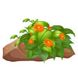 flower bush on rocks on white background vector image vector image