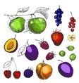 Hand drawn berries and fruits vector image vector image