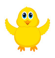 isolated cute chick vector image