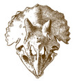 engraving of triceratops skull vector image