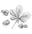 hand drawing leaves 6 vector image vector image