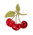 hand drawn cherry branch fruit vector image vector image