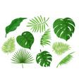 tropical carved and solid green apart leaves vector image vector image