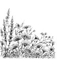field flowers sketch vector image