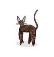 character of cornish rex in kawaii style vector image vector image