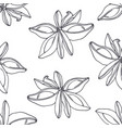 hand drawn outline seamless pattern with anise vector image