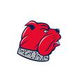 Red Bulldog Head Isolated Cartoon vector image vector image