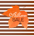 orange maple leaf autumn sale banner on a striped vector image vector image